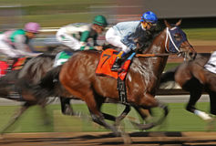 Motion Blur Racing Horses Royalty Free Stock Photo