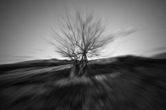 Motion blur of a single tree royalty free stock image