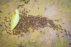 Motion blur top view of motion swarm of ants on dirt with moss i. N the forest Royalty Free Stock Photo