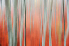 Motion blur of trees Royalty Free Stock Photography