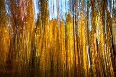 Motion blur of trees in an autumn forest Stock Photography