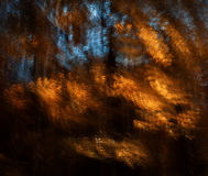 Motion blur of trees in an autumn forest Royalty Free Stock Photography