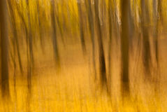Motion blur of trees in a autumn forest Royalty Free Stock Photos