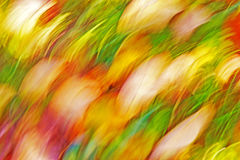 Motion blurred abstract background, pastel autumn colors Royalty Free Stock Image