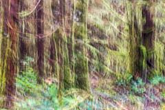 Motion blurred, abstract image of West Coast rainforest. Tree trunks and colorful forest floor between Ucluelet and Tofino on Vancouver Island, BC, Canada. Moss Stock Photography