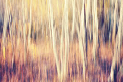 Motion blurred autumn forest, abstract nature background. Royalty Free Stock Image