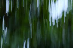 Motion blurred foliage abstract nature  blur  green background.  Stock Image