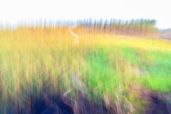 Motion blurred foliage Royalty Free Stock Image
