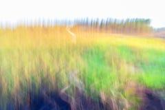 Motion blurred foliage. Background./ background Royalty Free Stock Image