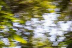 Motion blurred foliage. In the park in nature Royalty Free Stock Photography