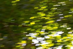 Motion blurred foliage. In the park in nature Royalty Free Stock Photos