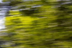 Motion blurred foliage. In the park in nature Stock Image