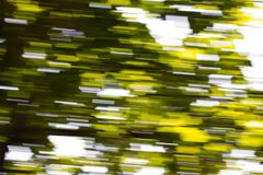 Motion blurred foliage. Photo of an abstract texture Stock Images