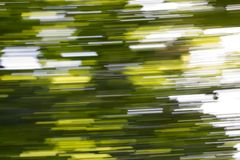 Motion blurred foliage. Photo of an abstract texture Royalty Free Stock Photos