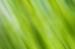 Motion blurred forest background Stock Photos