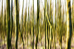Motion blurred forest background. Royalty Free Stock Image
