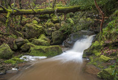 Motion blurred woodland stream Royalty Free Stock Photography