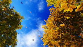 Motion through falling autumn leaves to the sky stock video footage