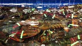 Motion of live lobsters in the tank stock footage