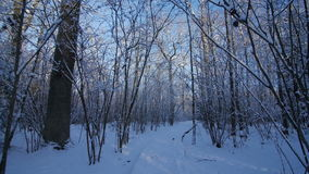 Motion by path among trees in snow covered park at winter day pov stock video footage