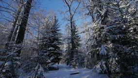 Motion by path among trees in snow covered park at winter day pov stock footage
