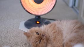 Motion of persian cat lie down and enjoy heat on the floor. With 4k resolution stock video