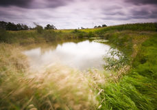 Motion on a pond Royalty Free Stock Images