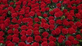 Motion of red rose decorate for Valentine`s Day. 4K UHD stock video