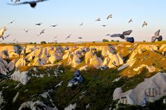 Motion Shot of Birds Flying on Mid Air over Mountains during Sunset Royalty Free Stock Images