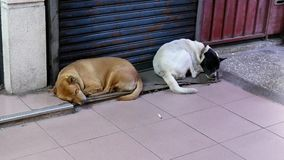 Motion of stray abandoned dogs are sleeping in a busy street corner stock video