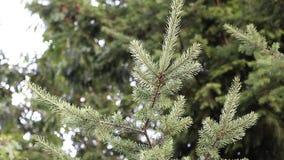 Motion of tree leaf stock video footage