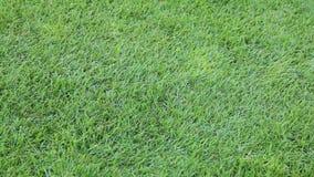 Motion video dalla cima di erba verde governata video d archivio