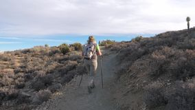 In Motion, The Woman Tourist Goes On A Trail In The Mojave Desert, Back View. Adult with excess weight, a female hiking with a backpack and trekking sticks, she stock footage
