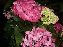Motiv av blommor i rosa och gula signaler royaltyfria foton
