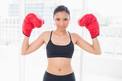 Motivated dark haired model in sportswear wearing red boxing gloves Stock Photography
