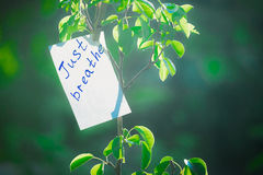 Motivating phrase just breathe. On a green background on a branch is a white paper with a motivating phrase. Motivating phrase just breathe. On a green Royalty Free Stock Images