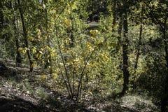 Motivi di area boscosa Immagini Stock
