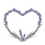 Motivo grafico del cuore, di nozze o del biglietto di S. Valentino della lavanda, pittura dell'acquerello, illustrazione Immagini Stock Libere da Diritti
