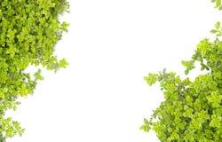 Motivo verde de la naturaleza imagenes de archivo