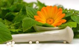 Motivos homeopáticos Imagen de archivo libre de regalías