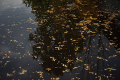 Motley autumn leaves on black water Stock Photography