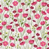 Motley camomile. Blossoming of simple and very attractive motley camomiles royalty free illustration