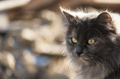 Motley cat Stock Images