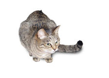 The motley cat Royalty Free Stock Photos