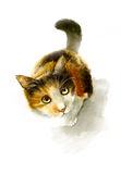 Motley cat looking up watercolor illustration Stock Photos