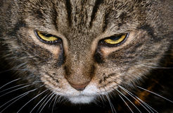 Motley cat Royalty Free Stock Images