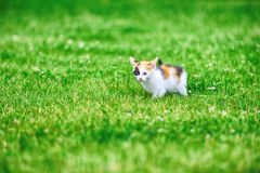 Motley cat. Playing on green grass Royalty Free Stock Photography