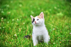 Motley cat. Playing on green grass Stock Photos