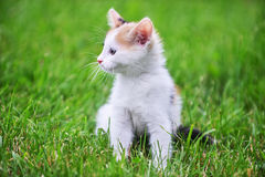 Motley cat. Playing on green grass Royalty Free Stock Image