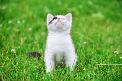 Motley cat. Playing on green grass Stock Image